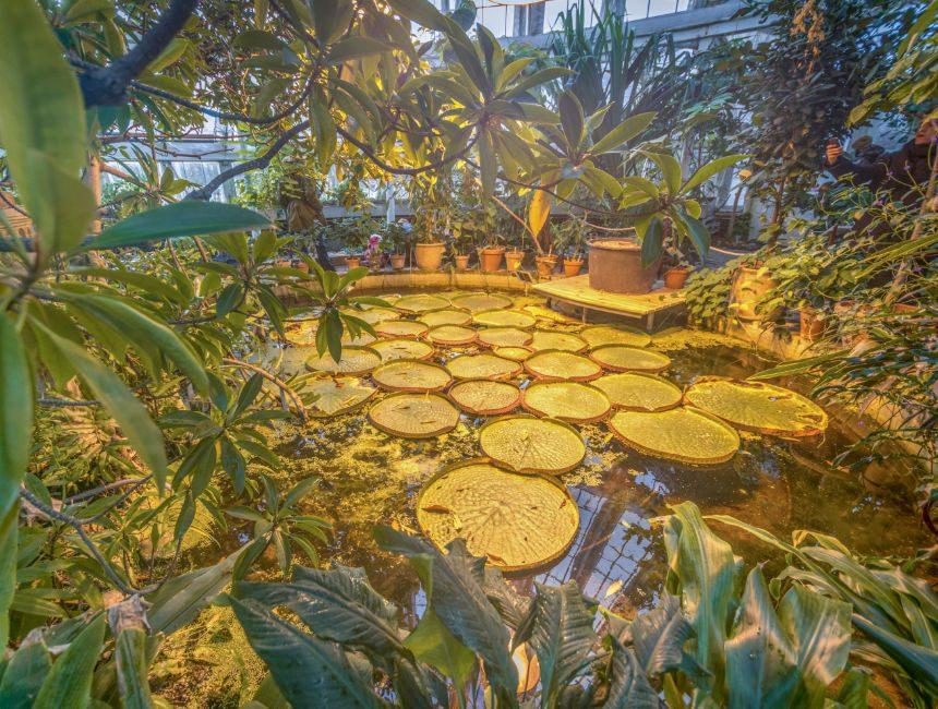 bezienswaardigheden Kopenhagen botanische tuinen