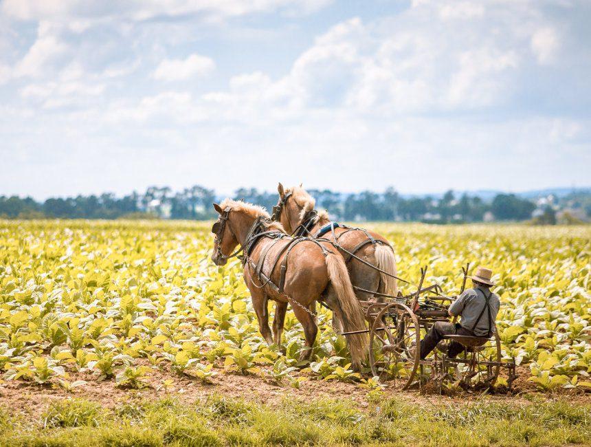 Amish Country vanuit New York
