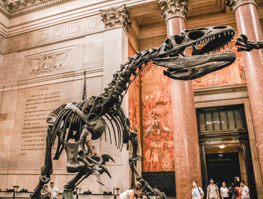 New York bezienswaardigheden American Museum of Natural History