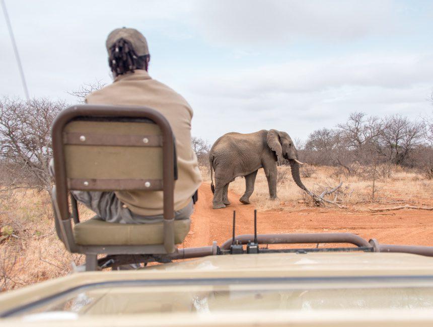 Sausage Tree Safari Camp Krugerpark