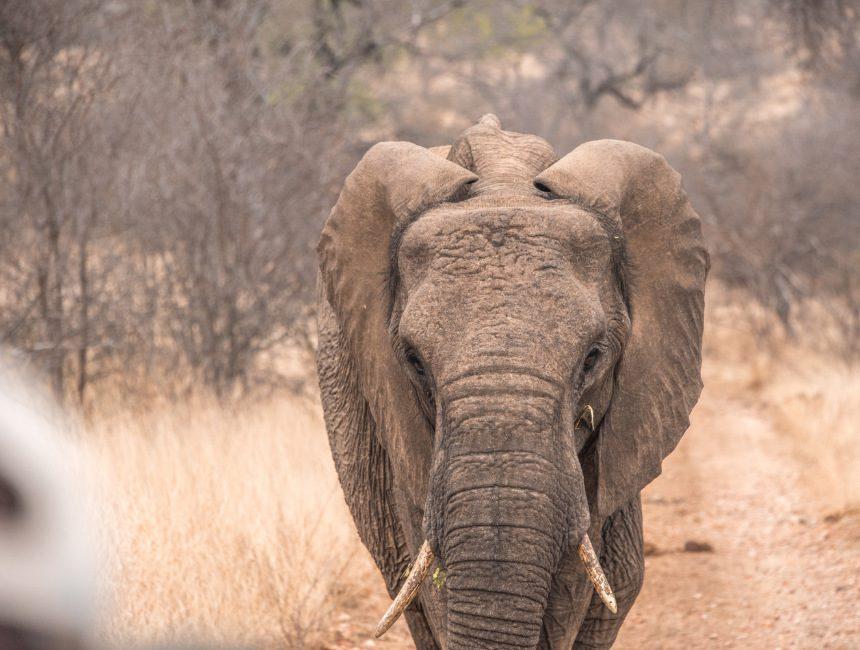 olifant Sausage Tree Safari Camp