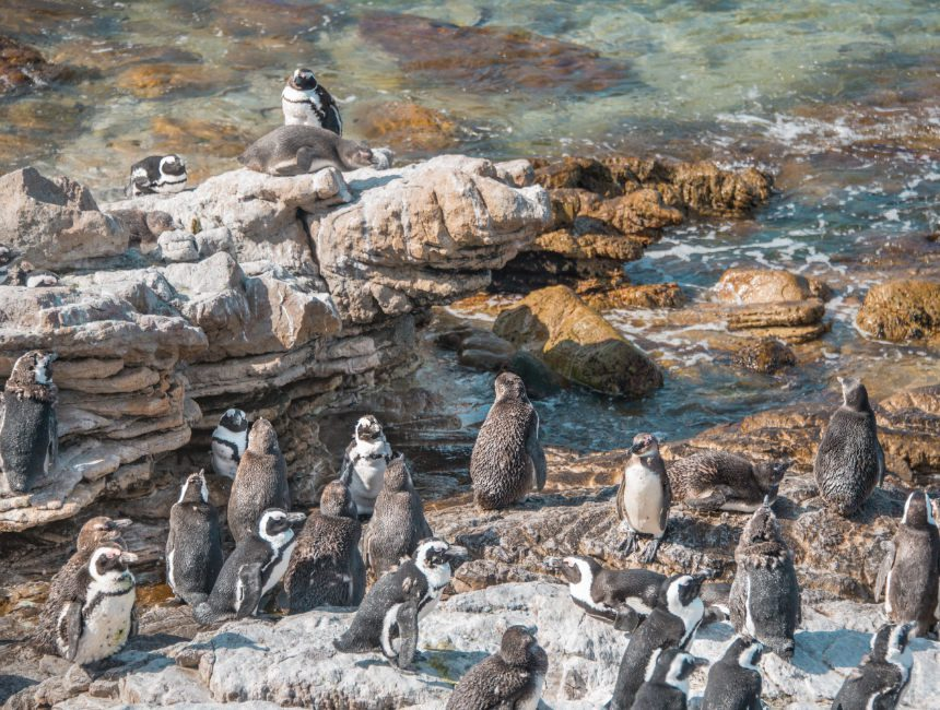 pinguins Garden Route