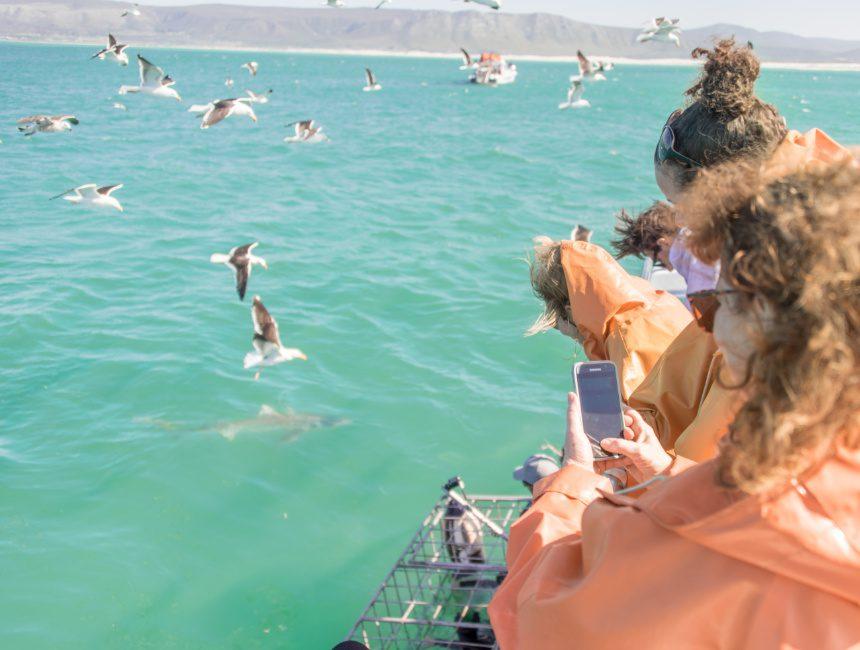 witte haaien tour zuid afrika kledij