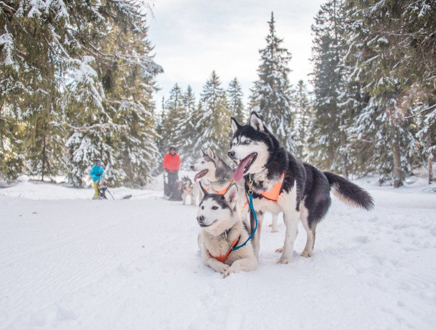 husky sleeën frankrijk savoie mont blanc