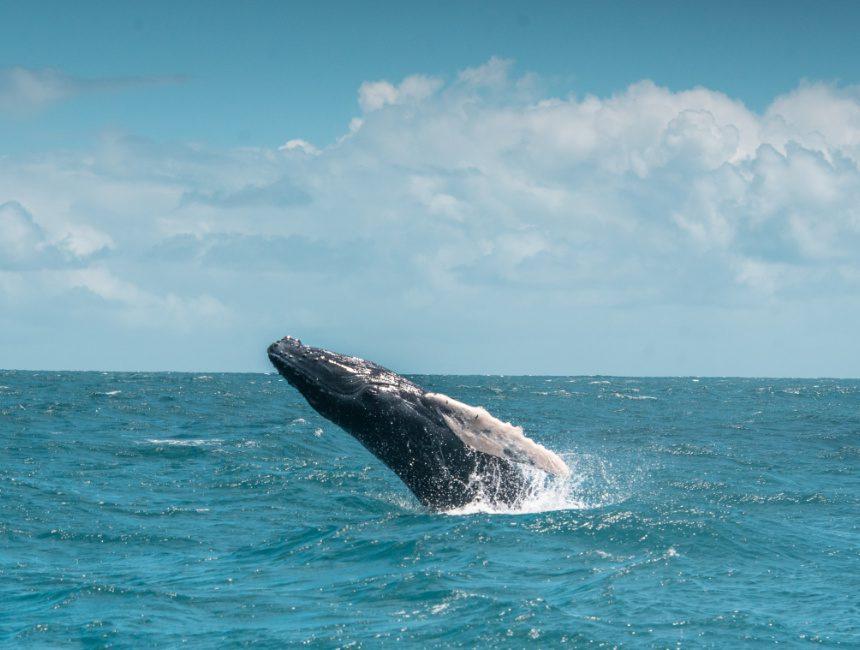 walvissen Dominicaanse republiek Samana covid-19