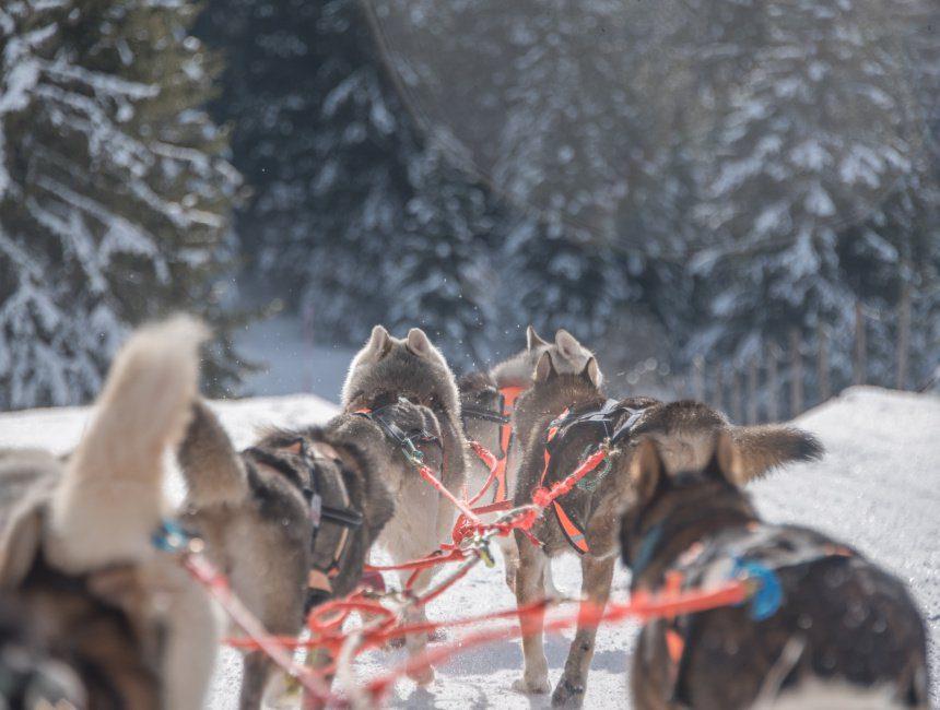 wintersportactiviteiten husky sleeen