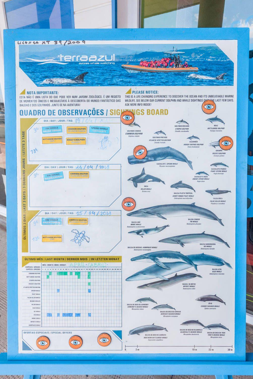 alle walvissen azoren
