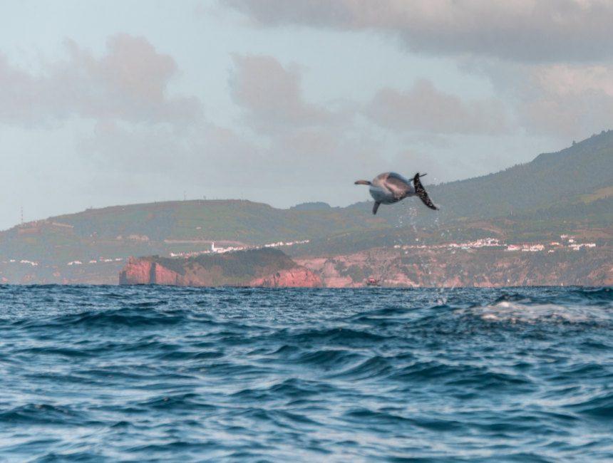 azoren dolfijnen