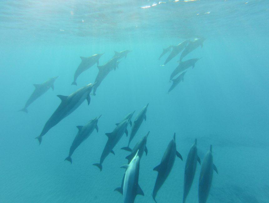 dolfijnen dominicaanse republiek