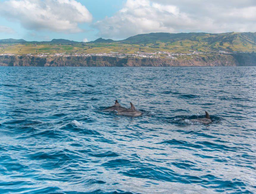 dolfijnen spotten azoren