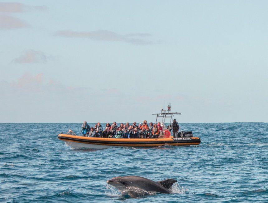 dolfijnen walvissen rondreis azoren