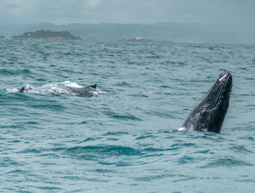 excursies punta cana samana walvissen
