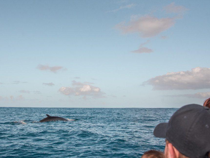 walvissen kijken azoren