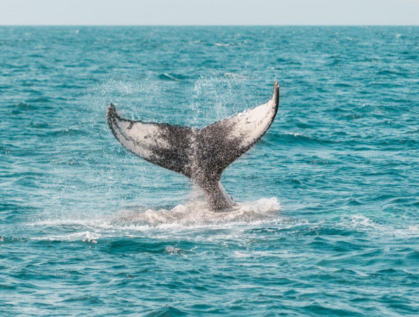walvissen newport beach