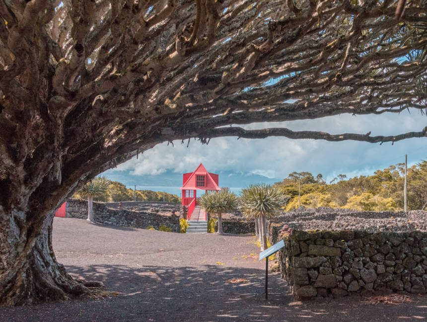 wijnmuseum pico azoren
