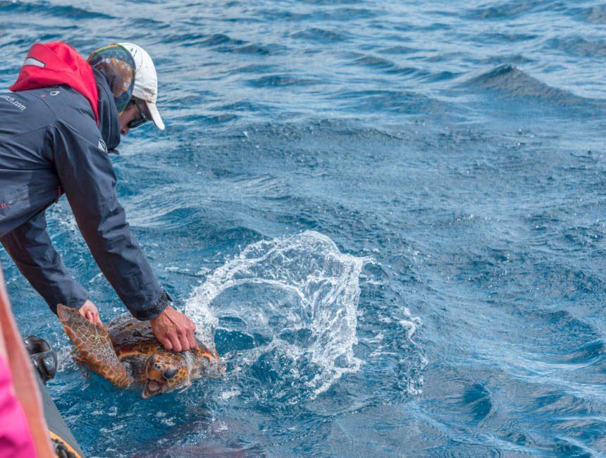 zeeschildpad azoren