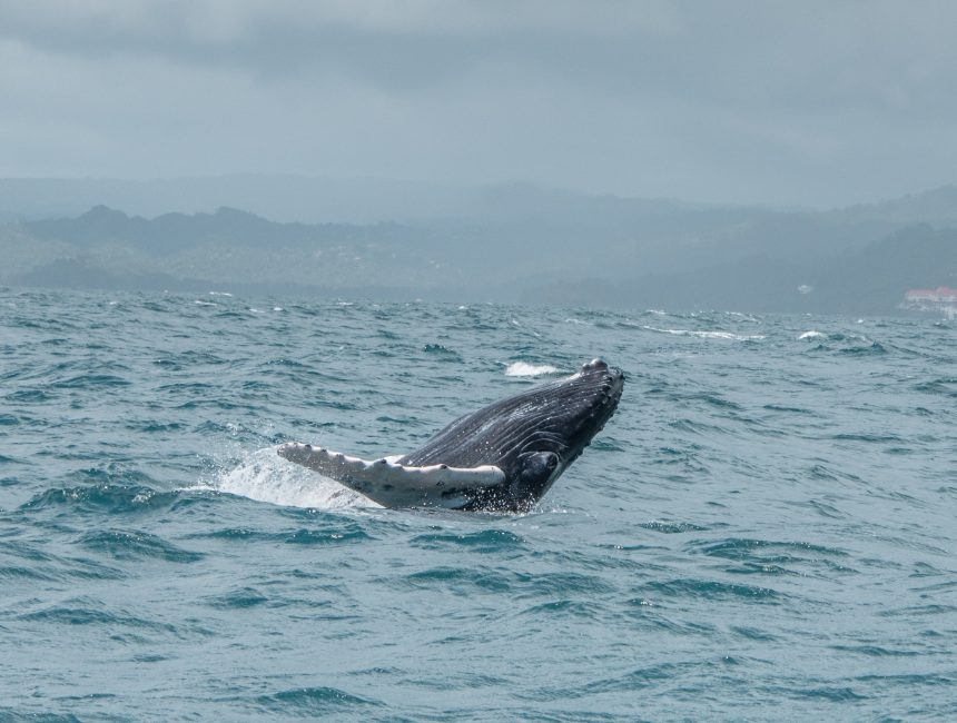 dominicaanse republiek tour walvissen