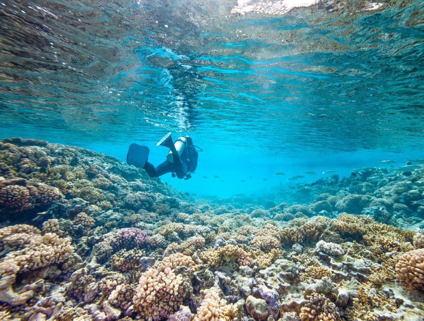 duiken caraiben