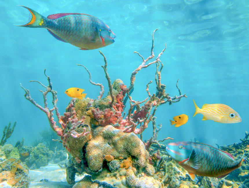 snorkelen dominicaanse republiek