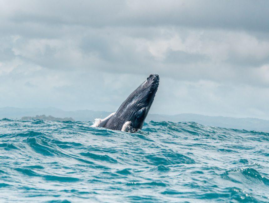 vakantie Dominicaanse Republiek walvissen