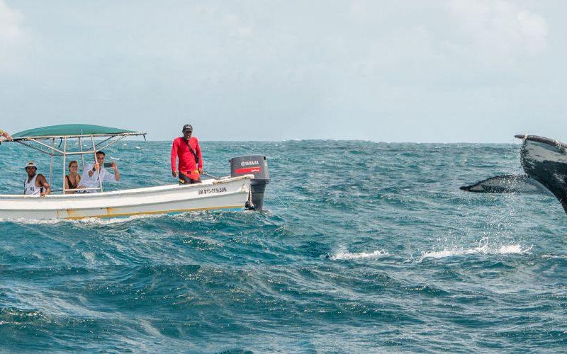 Dominicaanse republiek walvissen