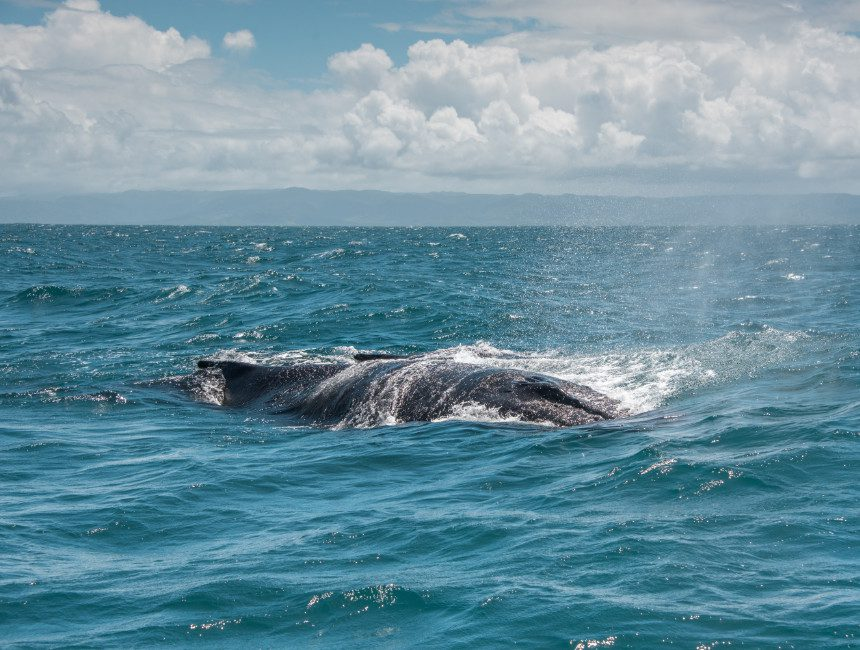 Silver Banks Dominicaanse Republiek walvissen