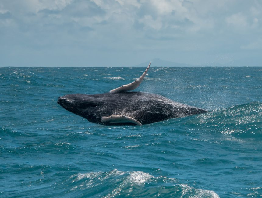 springende walvissen Dominicaanse Republiek