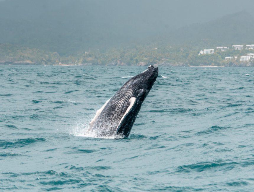 walvis excursie punta cana
