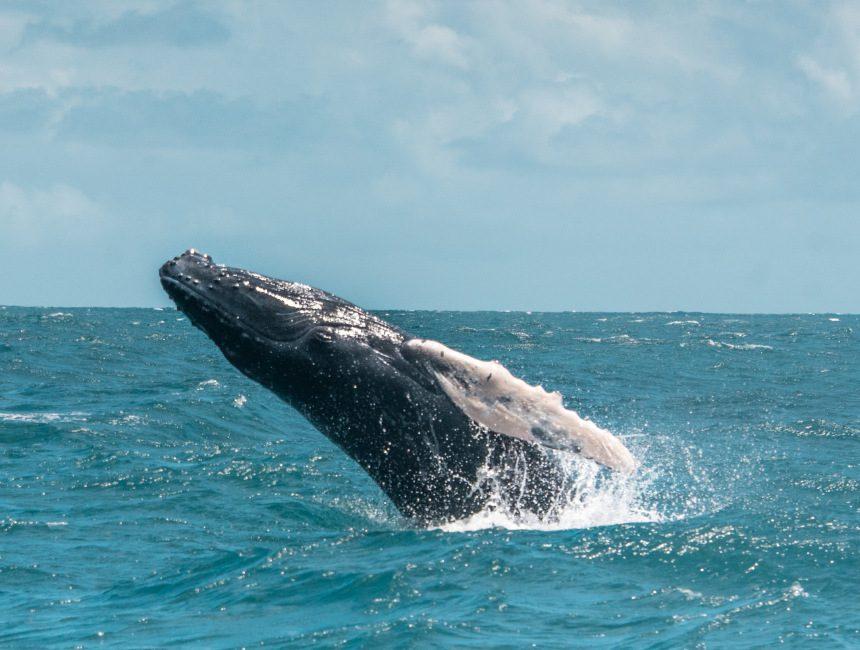 walvis safari Samana
