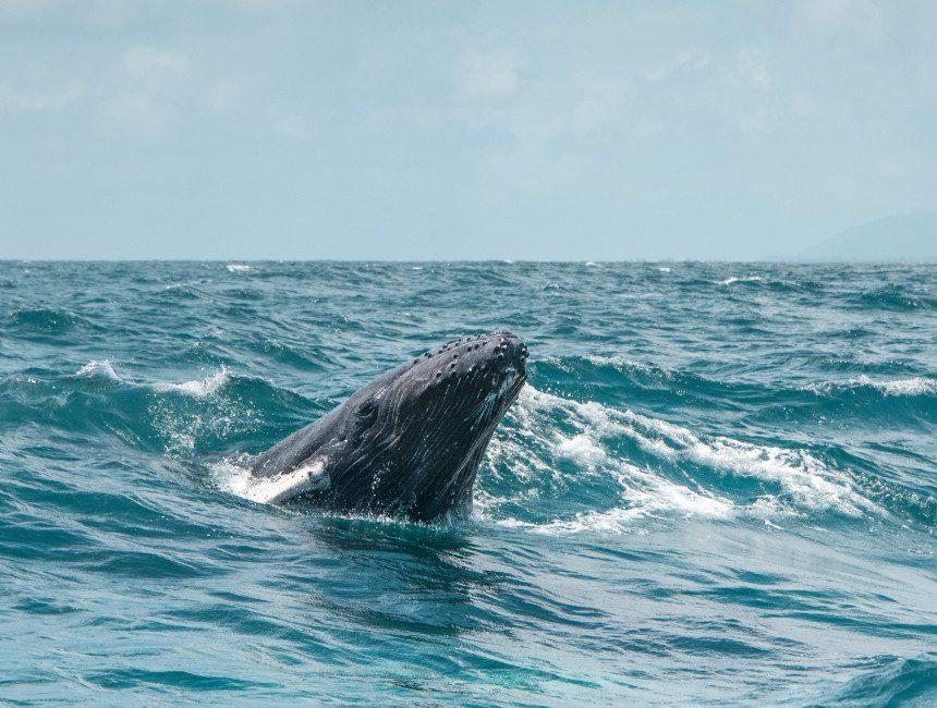 walvissen spotten Dominicaanse Republiek