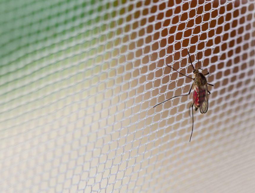muggennet
