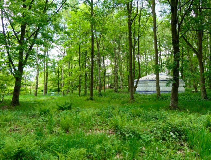 Sint-katelijne-waver Yurt