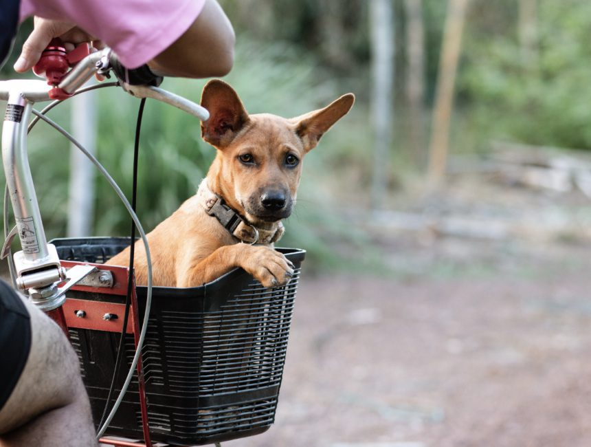fietsmand hond