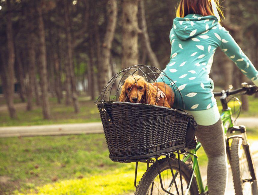 hondenfietsmand kopen