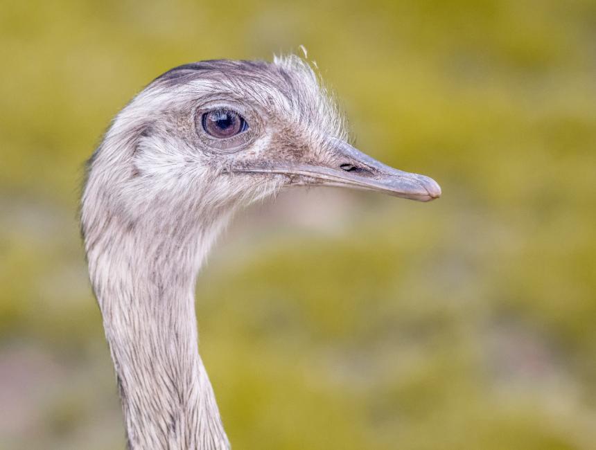struisvogelboerderij Sluis wat te doen