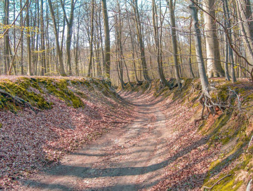 bos van Heverlee bezienswaardigheden omgeving Leuven