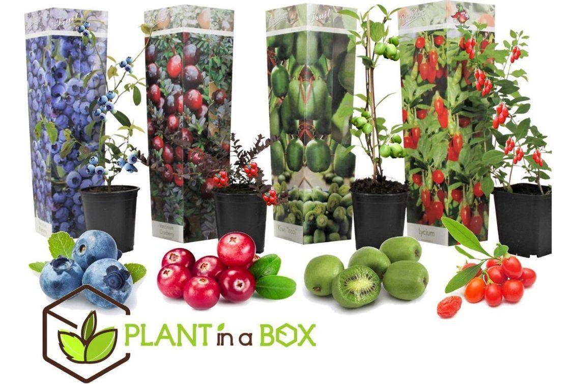 vaderdag cadeau tuinieren pakket fruitboom