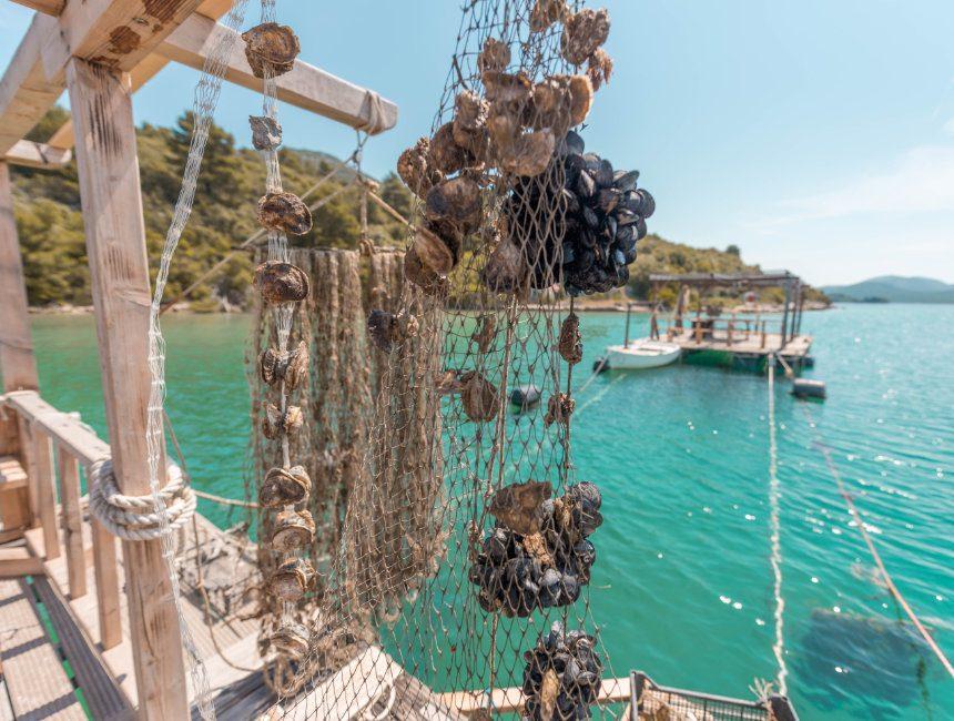 oesters proeven ston kroatie