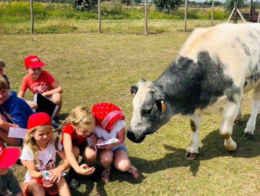 logeren op kinderboerderij