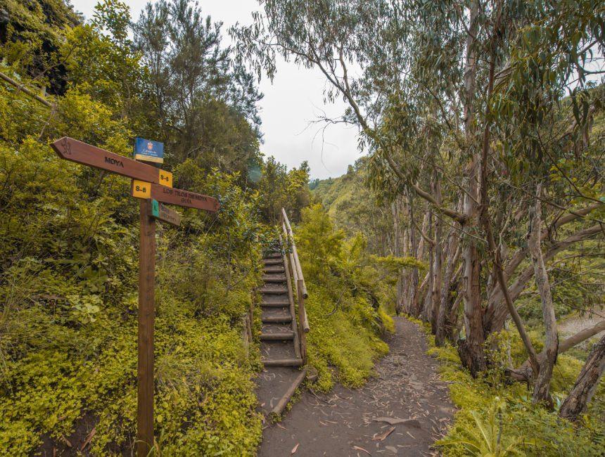 Los Tilos de Moya rondreis Gran Canaria