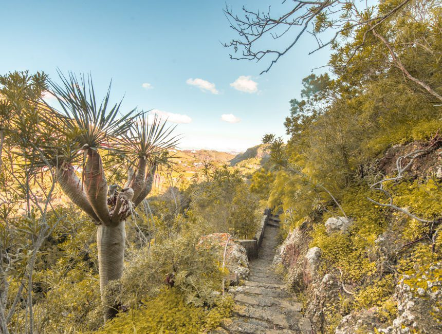 botanische tuinen Las Palmas