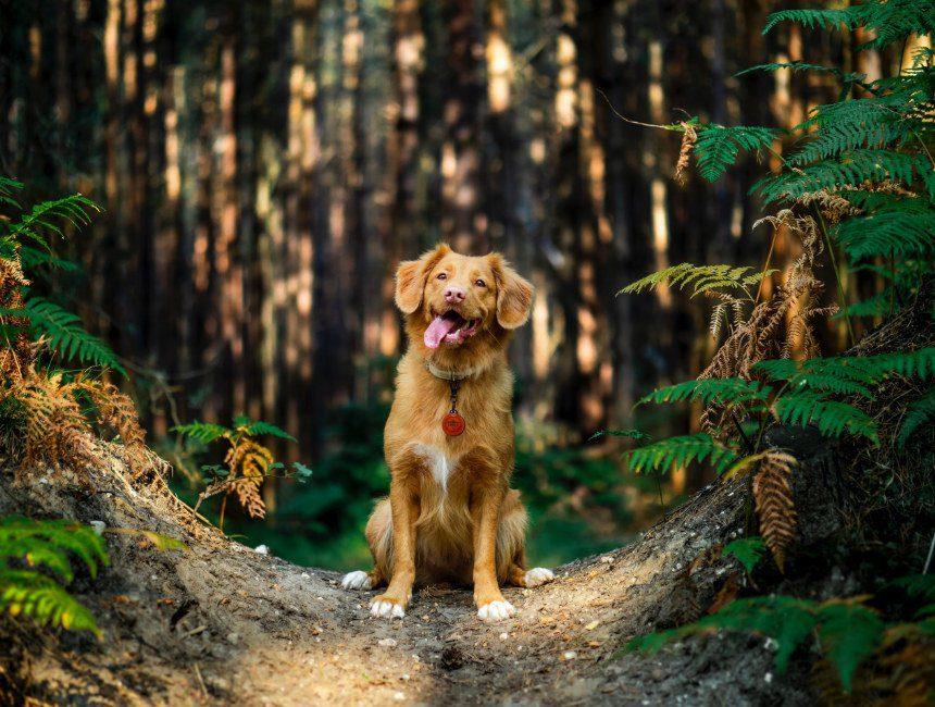 Ardennen overnachten met hond