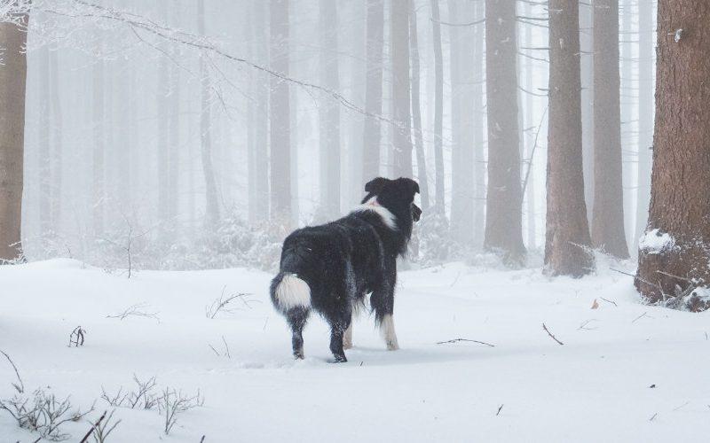 hondvriendelijke hotels Ardennen