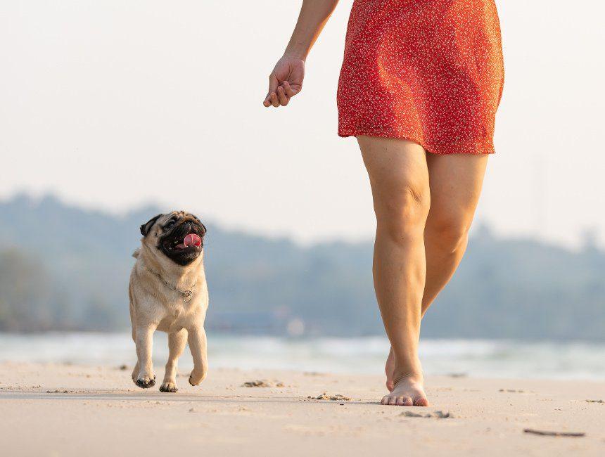 verblijf aan zee met hond