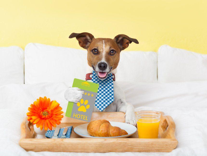 huisdiervriendelijke hotels