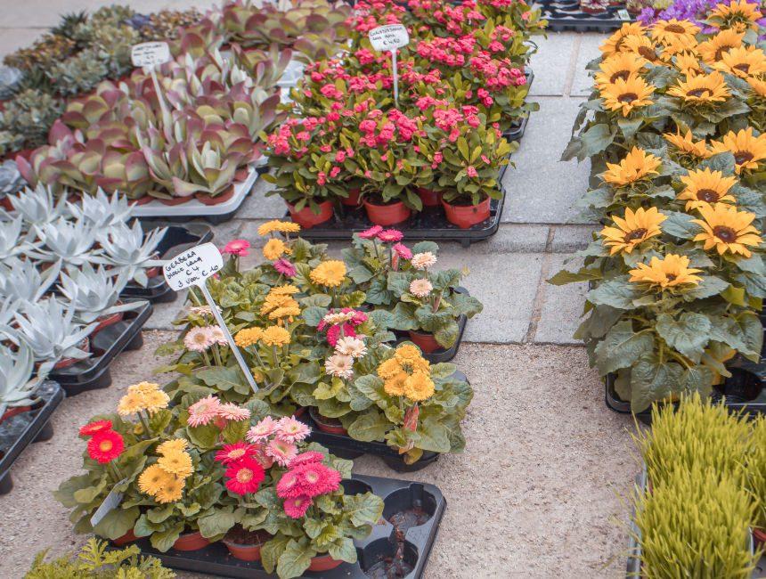 bloemenmarkt kouter gent
