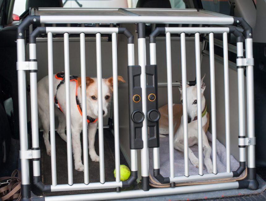beste vervoersbox hond