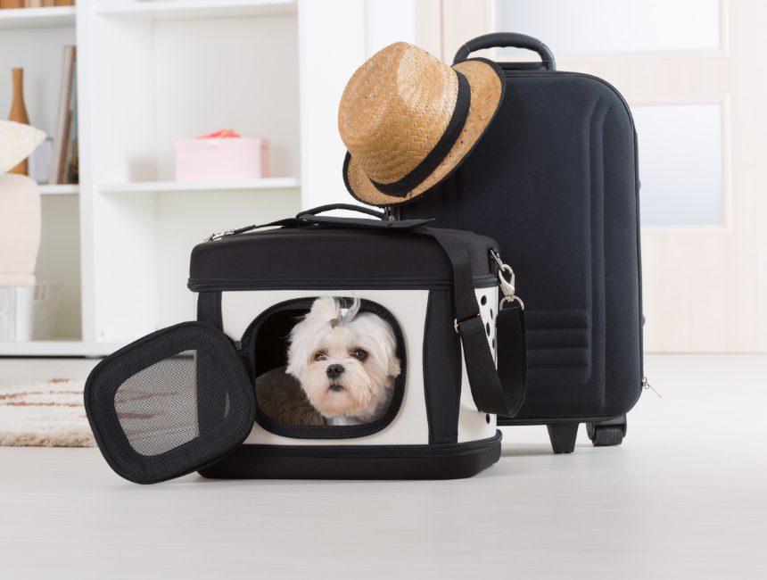 honden reisbench