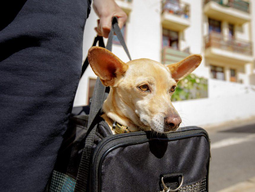 opvouwbare reisbench hond