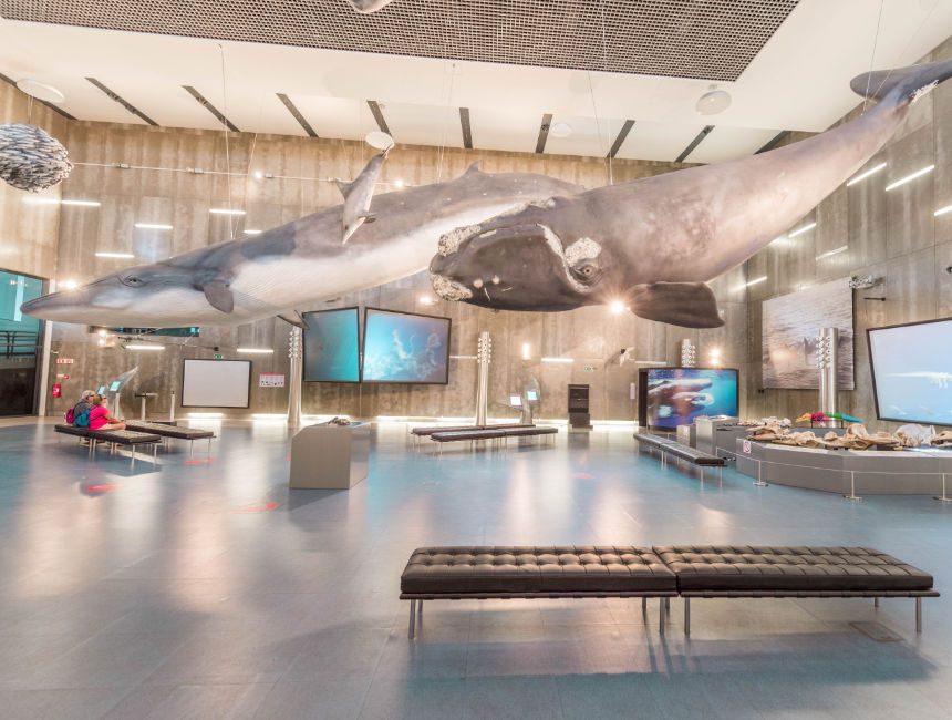 musea da baleia madeira autohuur
